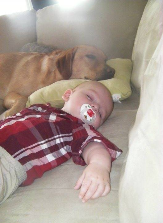 Babies and Dogs, they are literally the cutest couple ever! Be careful! They are going to kill you with their cuteness!