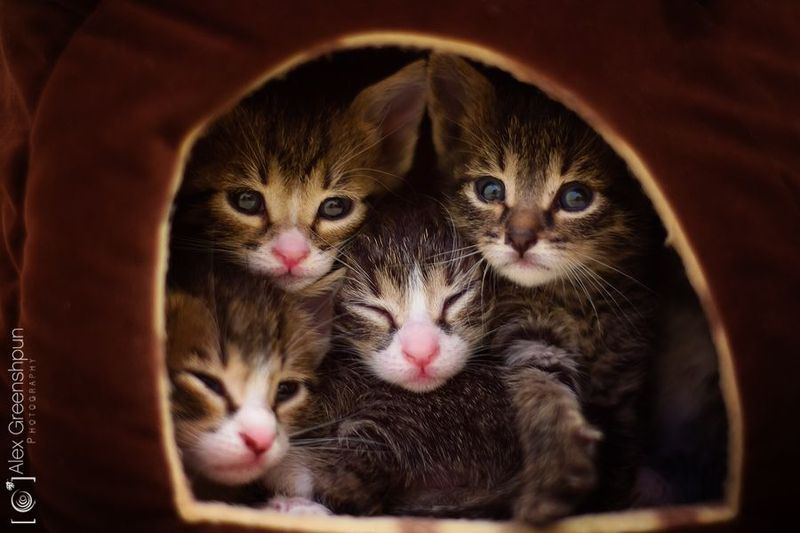 here are some abandoned kitties ready for adoption Alex Greenshpun Photography