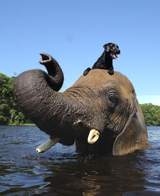 this elephant is best friended with a dog, they are so lovely!