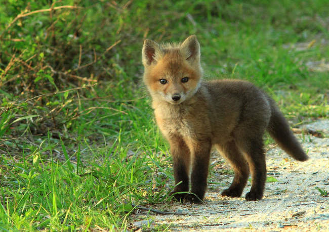 Adorable Photos of dangerous animals when they were little