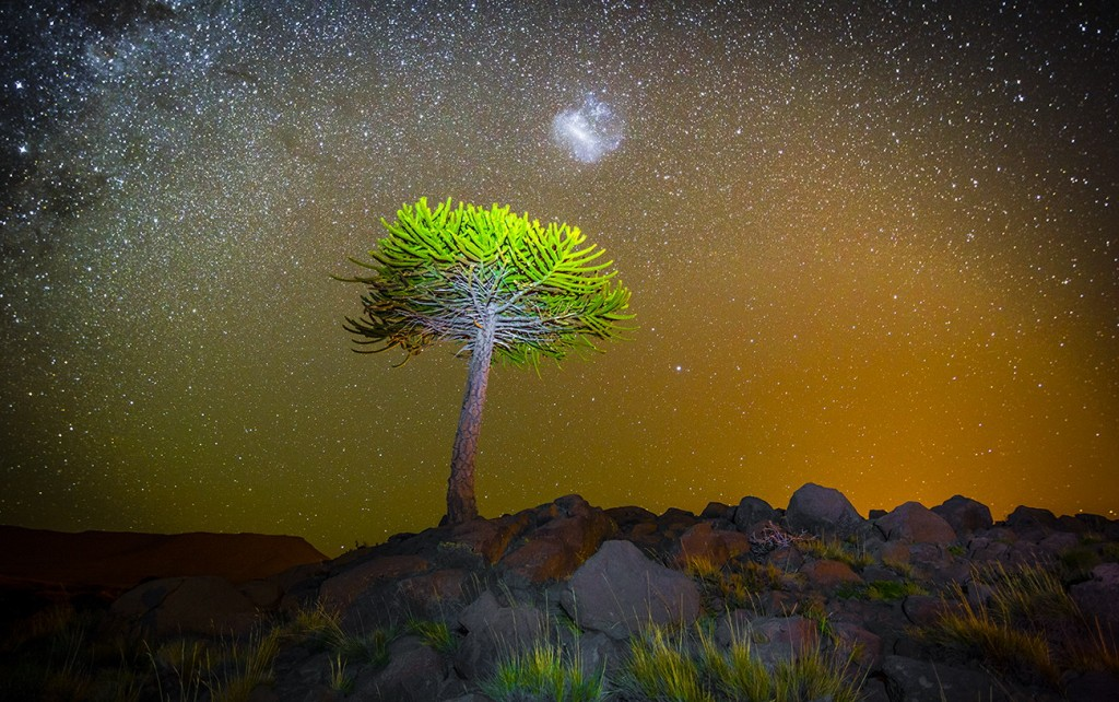 spectacular photographs by Francisco Negroni Araucaria