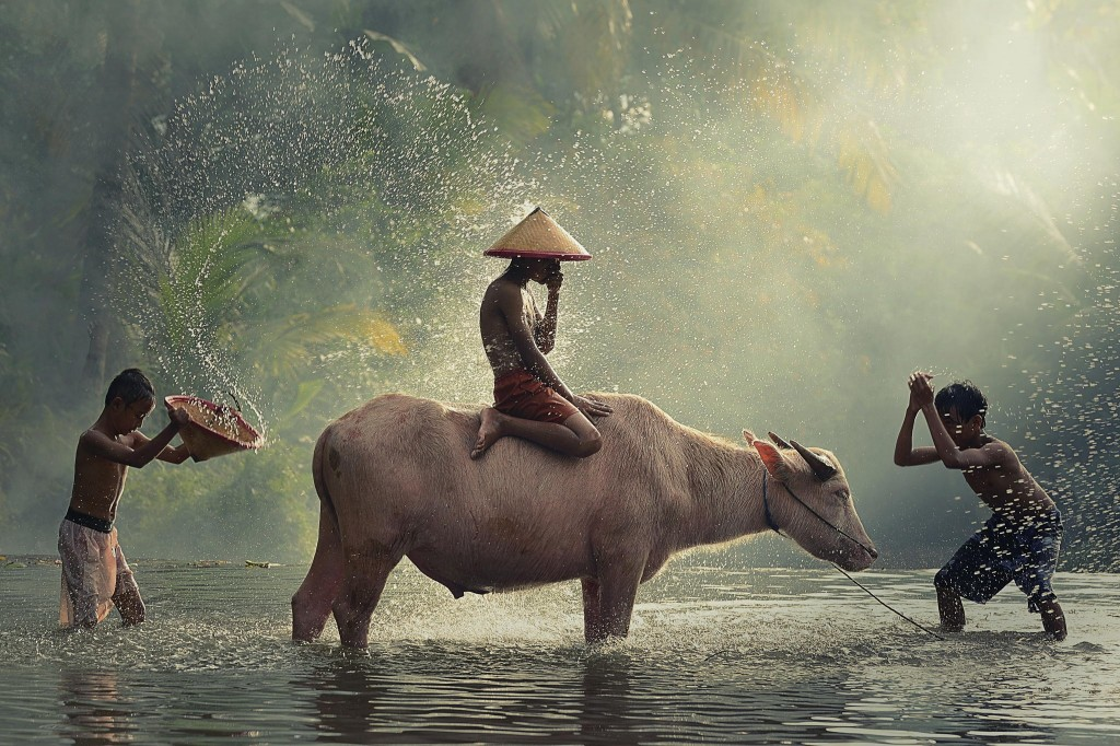 Gorgeous images by Thai photographer Vichaya Pop Water Buffalo