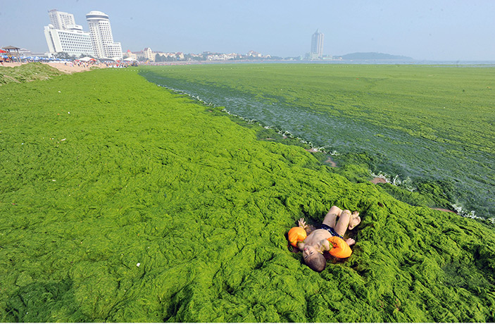 This awesome beach in Qingdao, China is covered by green algae!