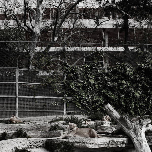 photographs of poor and lonely animals in zoo