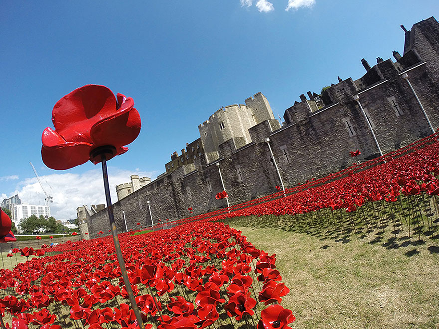 the tower of London is surrounded by 888,246 red poppies this summer to remember the fallen soldiers of WW1