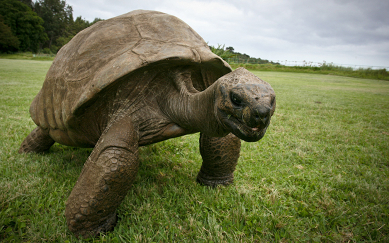 World's oldest living animal ever, This tortoise named Jonathan is the oldest creature on earth