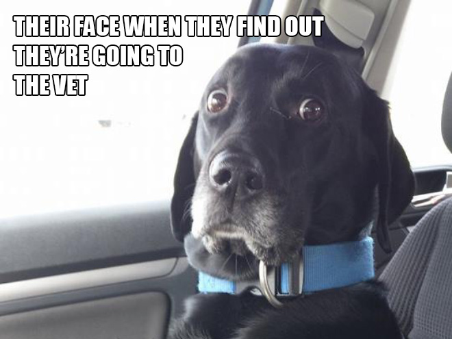 Hilarious Struggles Only Dog Owners Will Understand