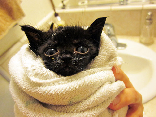 Cat Wrapped In Towels Appear As Burritos