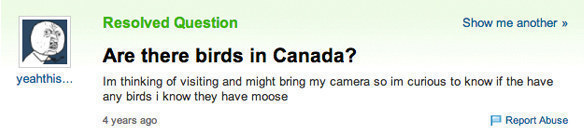 Probably the worst bird-related question ever: