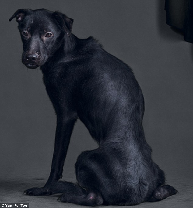 Downcast: The dogs' final moments were captured in the photo series. This dog had the longest gap between photograph and its death - it was put down 13 hours later