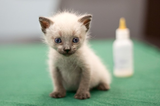 25 Lovely Teeny Tiny Kittens
