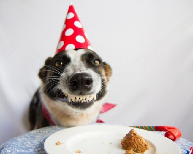Animals Celebrating Their Birthday