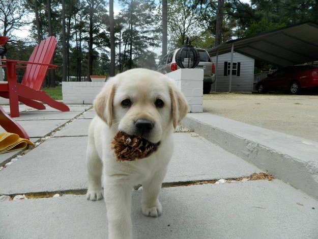 And this adorable pinecone thief.
