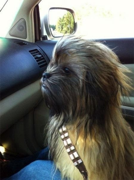 Chewbacca On A Road Trip