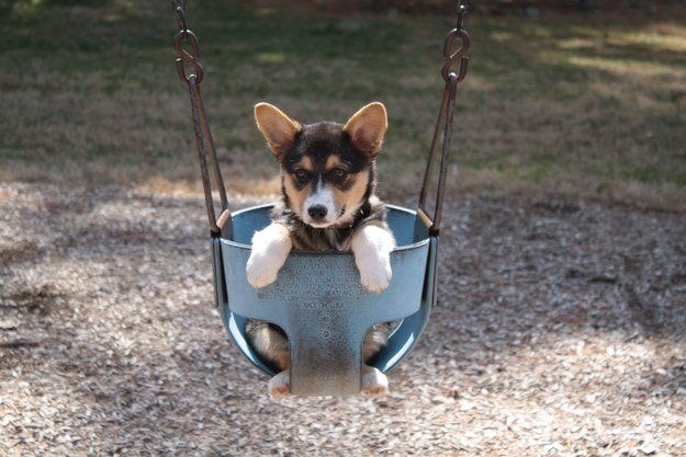 This corgi pup who is all about having a good time.
