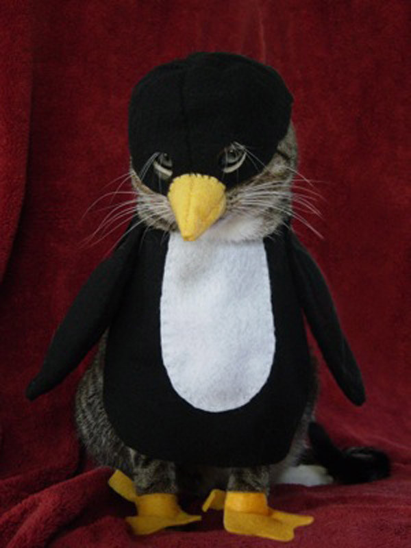 I know this one looks like it's just a dumb penguin, but it's actually a CAT, dressed as a penguin.