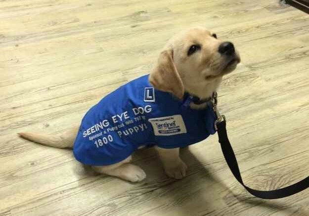 And this guide dog on his first day of school.