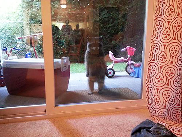 Look Meredith, We Both Said Things We Didn't Mean, Can You Just Let Me In So We Can Talk About This?