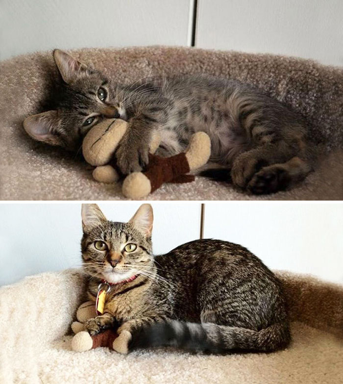 Eight Months Later, My Little Ball Of Fury