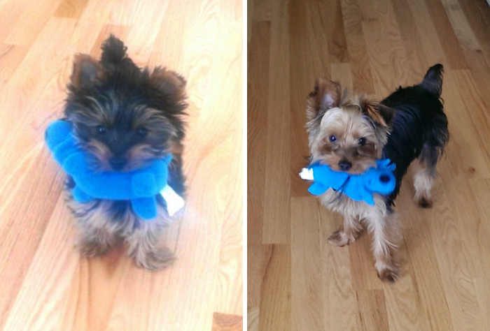Benny And His Favorite Toy Nine Months Later