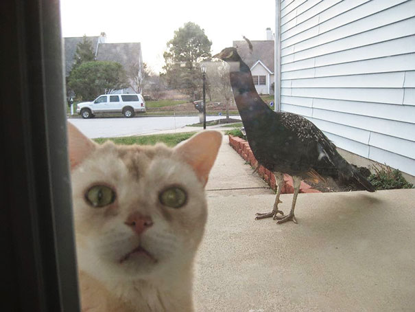 Let Me In Please, I&Not The Mighty Hunter I Thought I Was