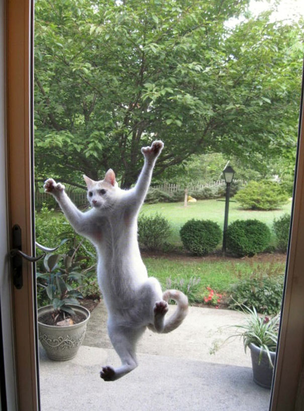 Spider Cat Wants In!