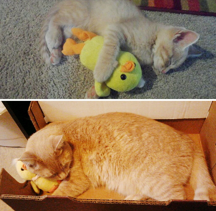 Eighteen Months Later And He Still Sleeps With His Duck