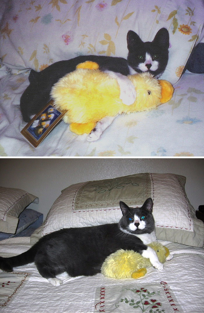 Seven Years Later, He Still Loved His Duck