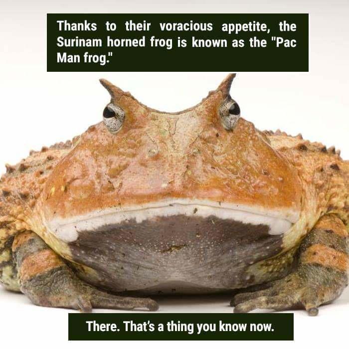More Facts from Weird Nature on Facebook