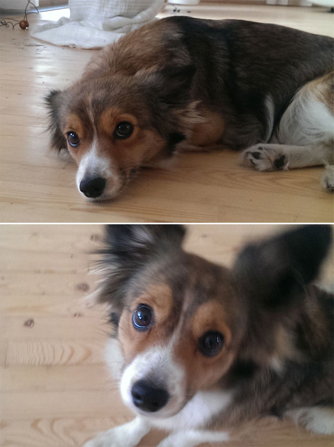 Pics Before and After Being Called A Good Boy